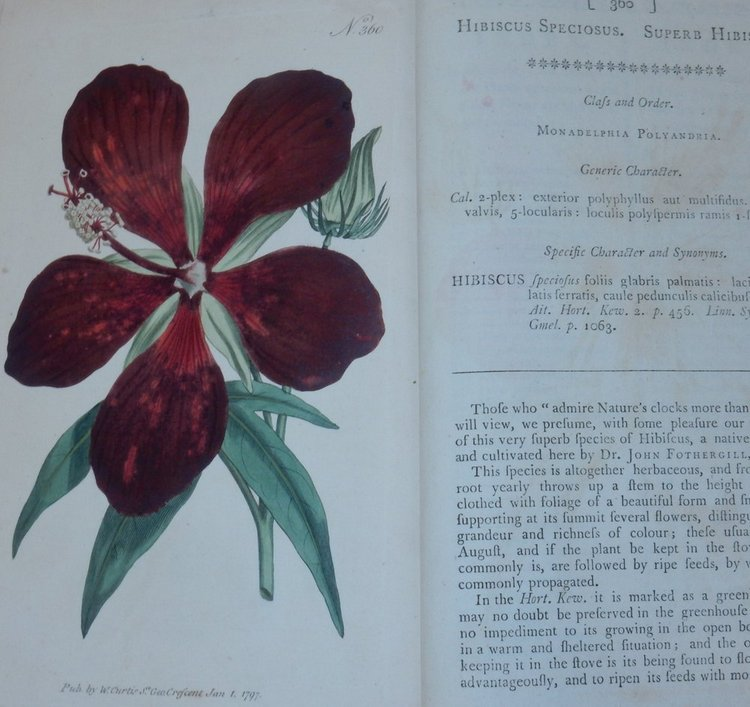 The Botanical Magazine ; or, Flower-Garden Displayed : In which the most Ornamental Foreign Plants, cultivated in the Open Ground, the Green-House, and the Stove, are accurately represented in their natural Colours ... Together with the most approved methods of culture. A Work Intended for the Use of such Ladies, Gentlemen, and Gardeners, as wish to become scientifically acquainted with the Plants they cultivate. William Curtis.