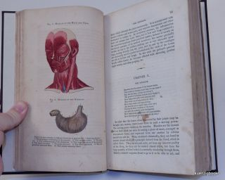 A Treatise on Anatomy, Physiology, and Health. Designed for Students, Schools, and Popular use. Illustrated with numerous plates.