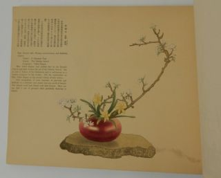 Representative Flower Arrangements of Present-Day Japan, Vol. III