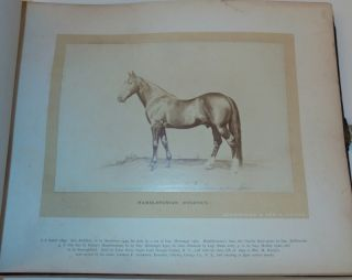 Schreiber & Son's Portraits of Noted Horses of America [ cover title ]
