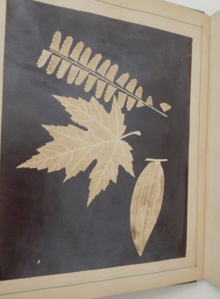 Leaf Prints : or Glimpses at Photography