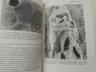 Electron Microscopy of Enzymes, Principles and Methods Volume 4