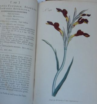 The Botanical Magazine ; or, Flower-Garden Displayed : In which the most Ornamental Foreign Plants, cultivated in the Open Ground, the Green-House, and the Stove, are accurately represented in their natural Colours ... Together with the most approved methods of culture. A Work Intended for the Use of such Ladies, Gentlemen, and Gardeners, as wish to become scientifically acquainted with the Plants they cultivate
