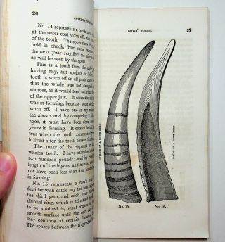 TEETH, Their Structure, Disease, Treatment ... illustrated by numerous engravings ...Twelfth Edition